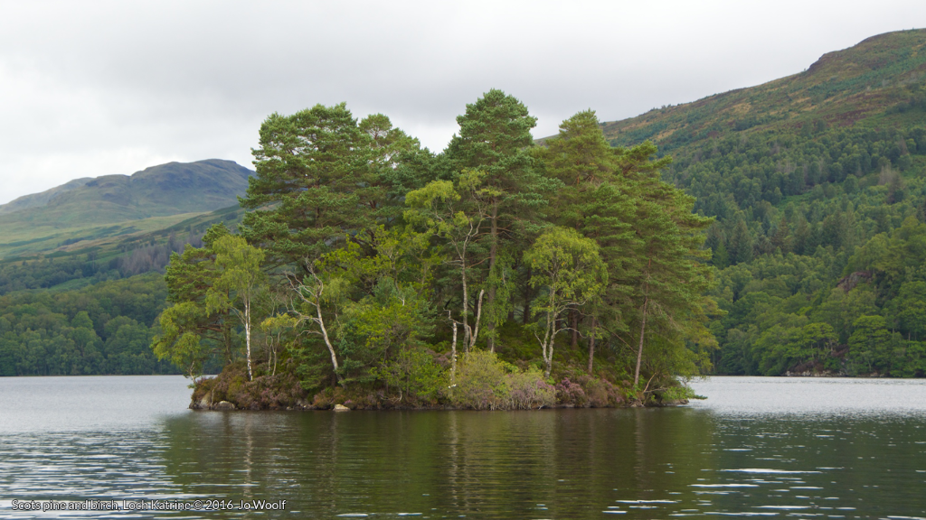 Scots pine and birch, Loch Katrine © Jo Woolf