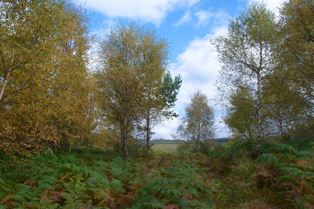 Birch trees © 2016 Jo Woolf.