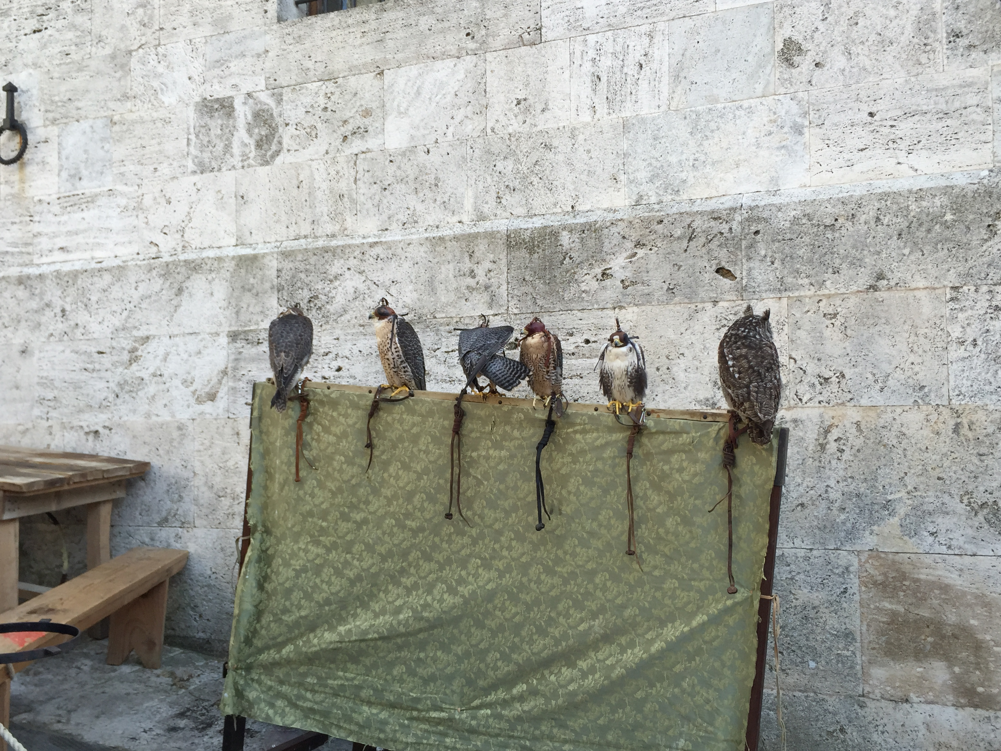 Ready for Some Medieval Falconry © Lisa M. Vogele