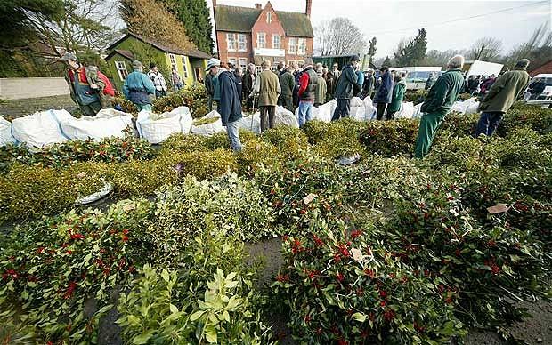 Mistletoe at Tenbury Wells © Anne O'Brien