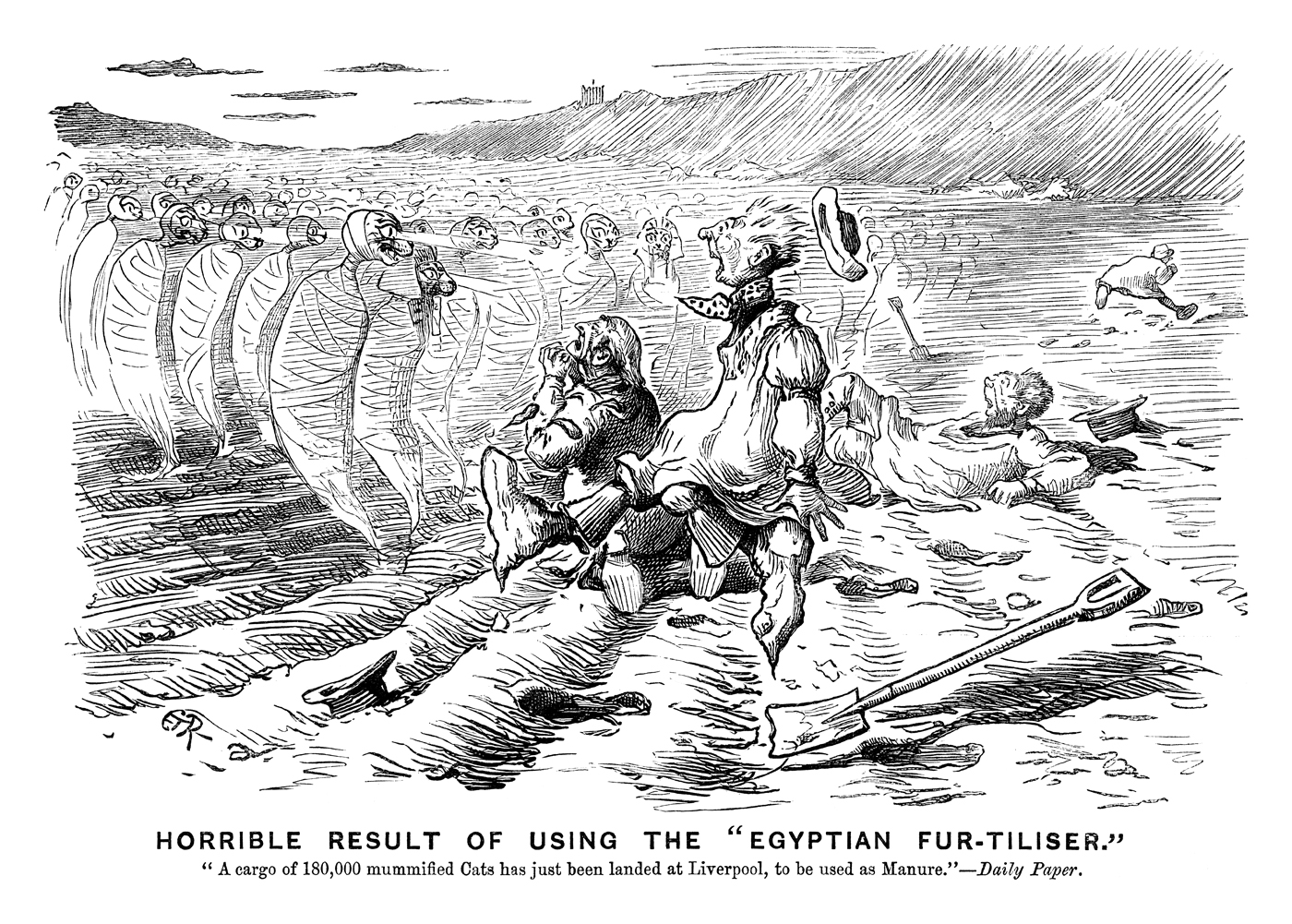 "Horrible Result of Using the 'Egyptian Fur-tiliser.' ""A cargo of 180,000 mummified cats has just been landed at Liverpool, to be used as manure."" - Daily Paper. Published in Punch 15 February 1890. By E T Reed © Punch Ltd"