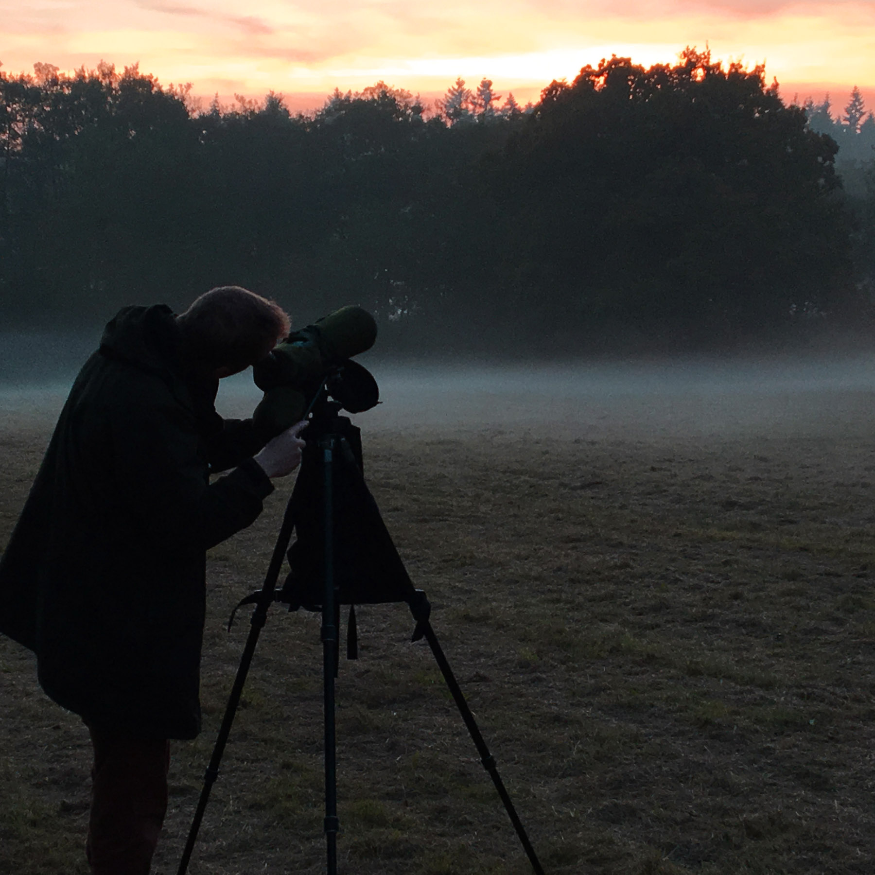 Edward Parnell scanning for bramblings in the rising mist © K. Walne