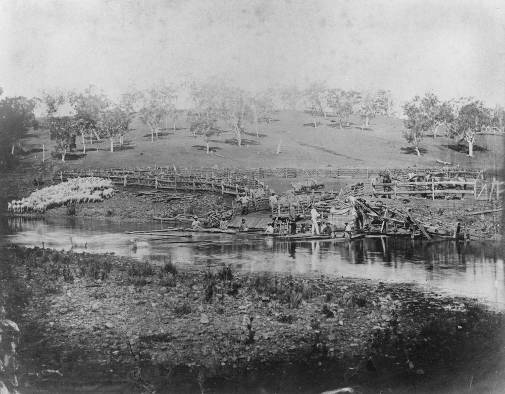 Washing sheep prior to shearing, 1880s — John Oxley Library, State Library of Queensland https://commons.wikimedia.org/w/index.php?curid=26258964