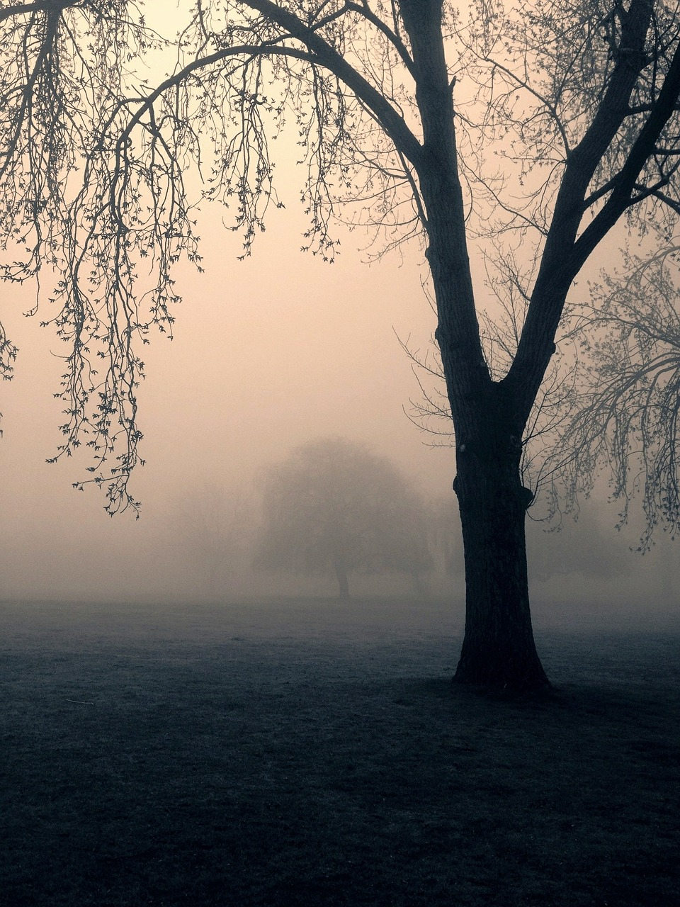 https://pixabay.com/en/trees-spooky-mist-park-nature-448554/