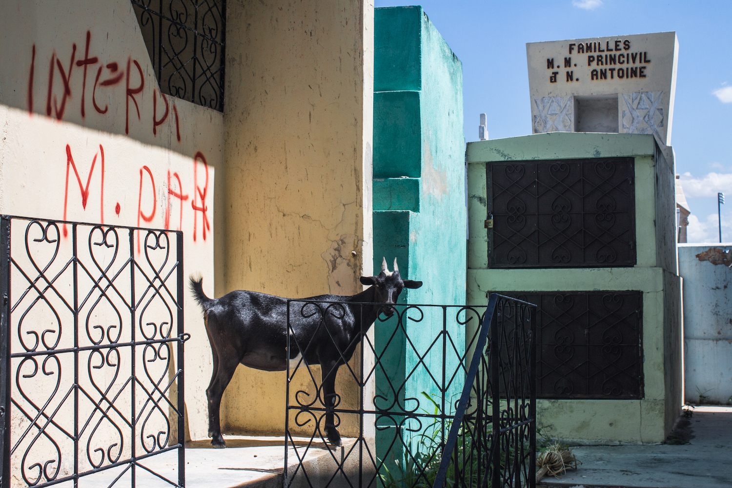 This Haitian cemetery was overrun with goats, graffiti and decorative ironwork. © Darmon Richter http://www.thebohemianblog.com/2015/04/haitian-vodou-port-au-prince.html