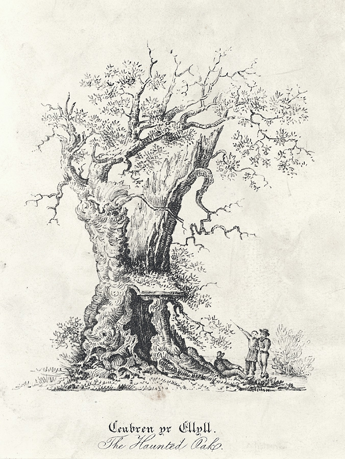 Black and white drawing of the tree