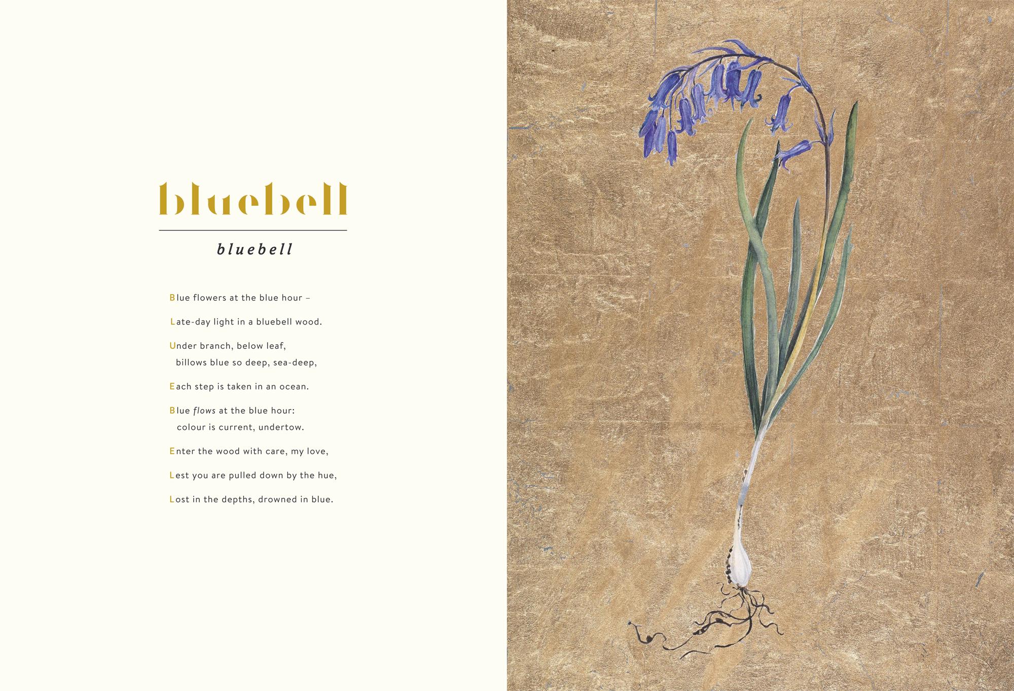 Bluebell © Jackie Morris & Robert Macfarlane