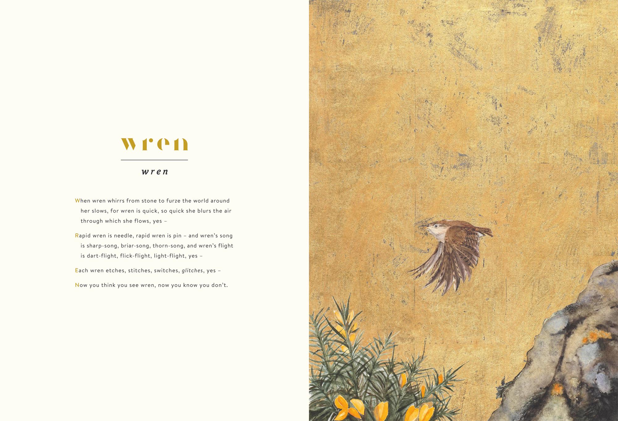 Wren © Jackie Morris & Robert Macfarlane