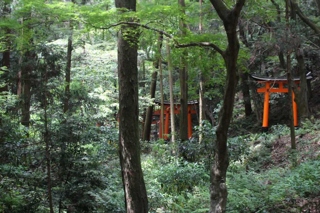 The trail of torii gates weaving through the forest to the top of Mount Inari © Amelia Starling