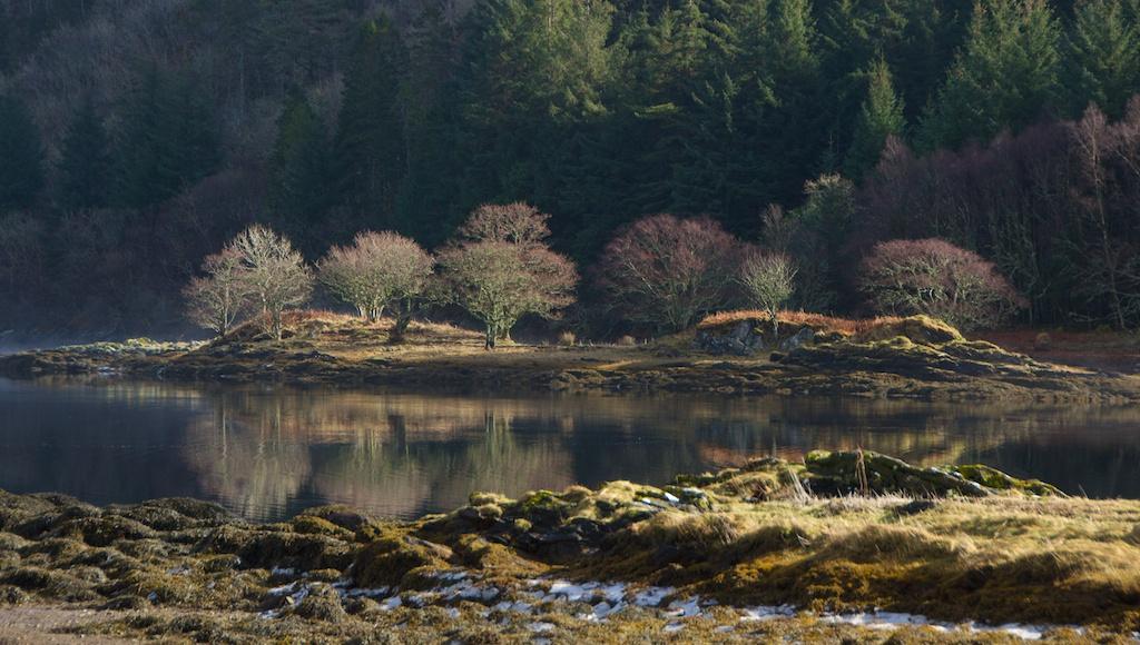 Birches in winter, Scotland © 2016 Jo Woolf.
