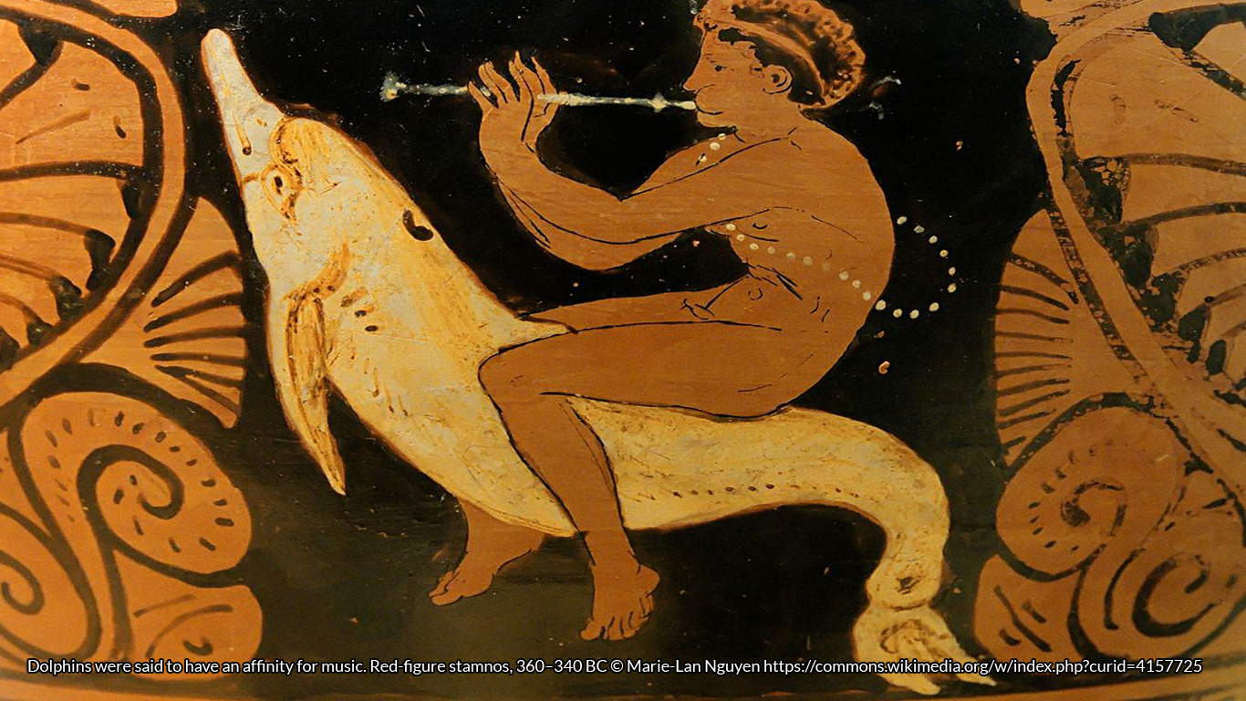 Dolphins were said to have an affinity for music. Red-figure stamnos, 360–340 BC © Marie-Lan Nguyen https://commons.wikimedia.org/w/index.php?curid=4157725