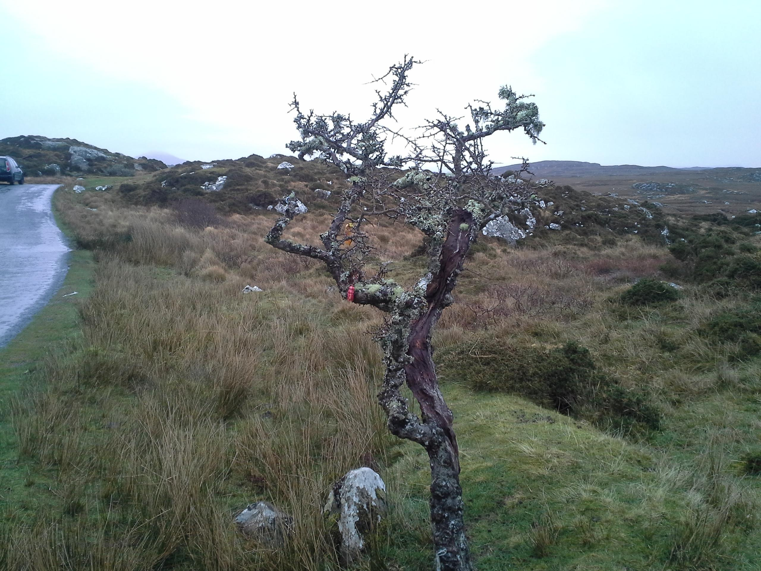 An Irish fairy tree