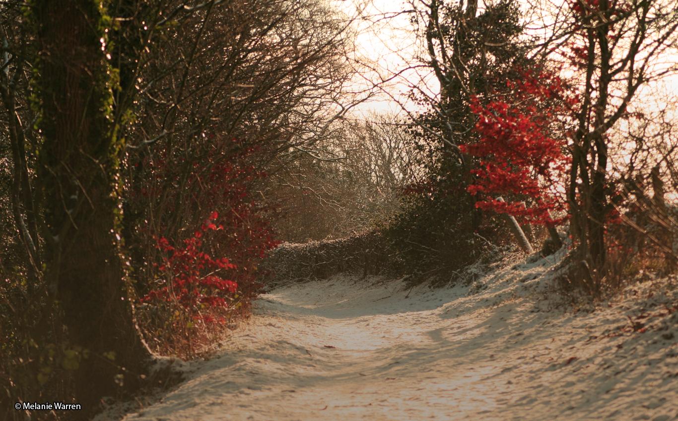 Snow in the trees © Melanie Warren