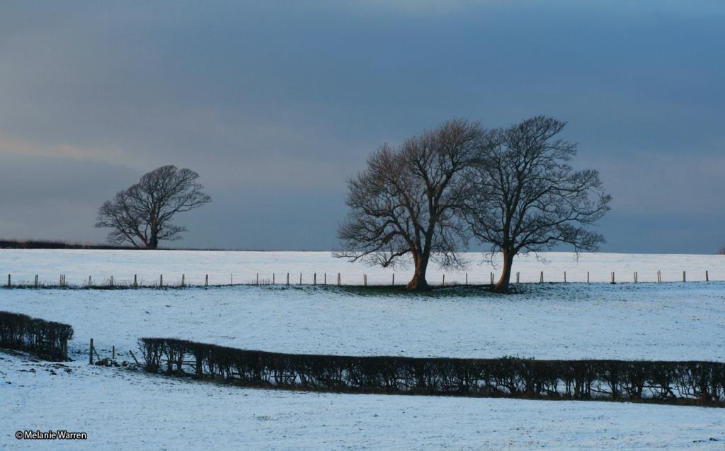 Winter Snow © Melanie Warren