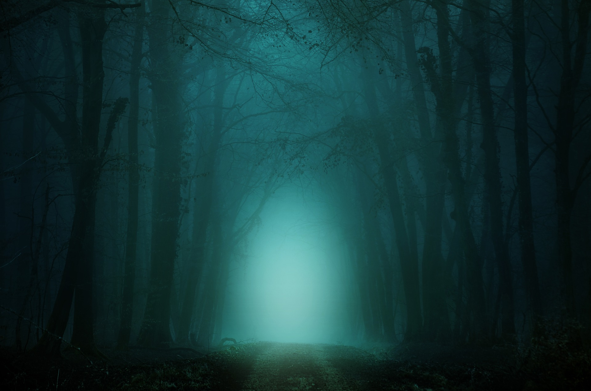 Spooky Forest https://pixabay.com/illustrations/forest-away-fog-trees-atmosphere-4099730/