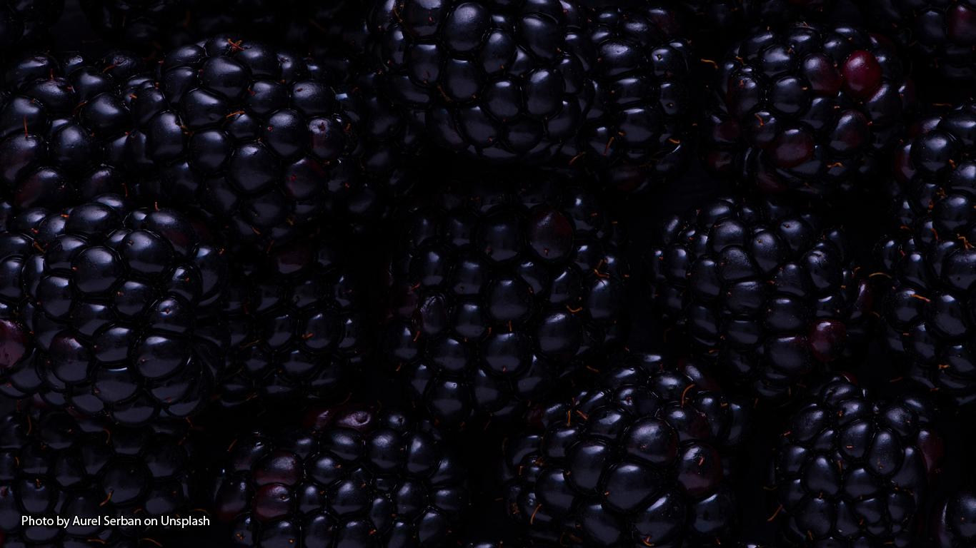 The Devil's Blackberries