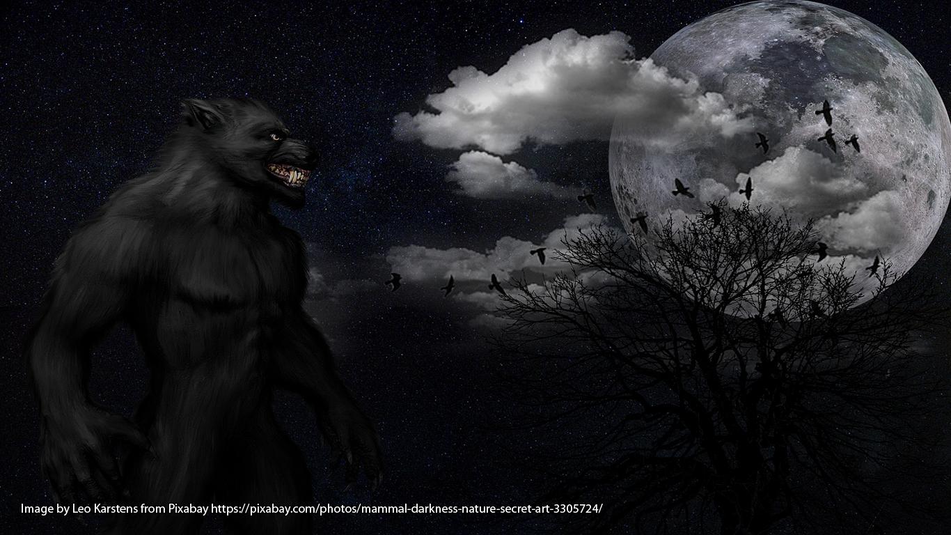 Image by Leo Karstens from Pixabay https://pixabay.com/photos/mammal-darkness-nature-secret-art-3305724/