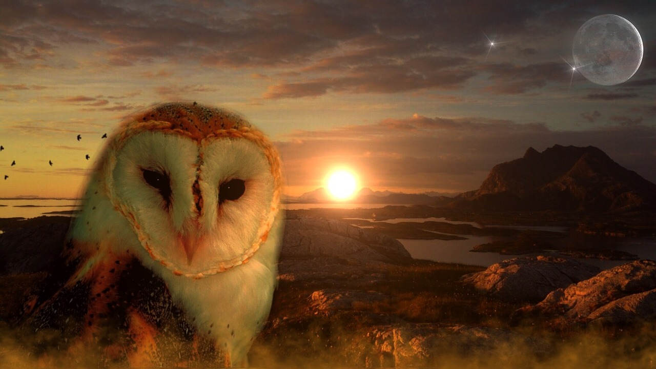 Owl folklore. https://pixabay.com/photos/owl-sun-moon-star-mountains-lakes-711601/