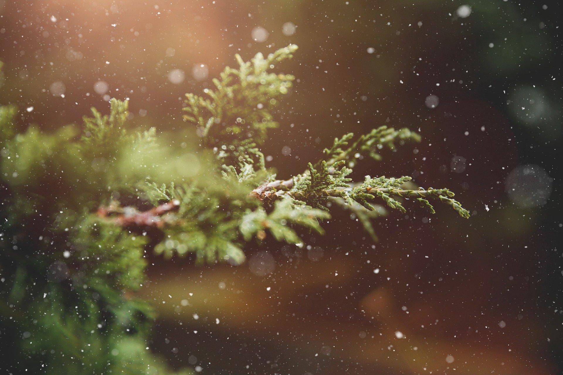 Christmas tree Image by Pezibear from Pixabay