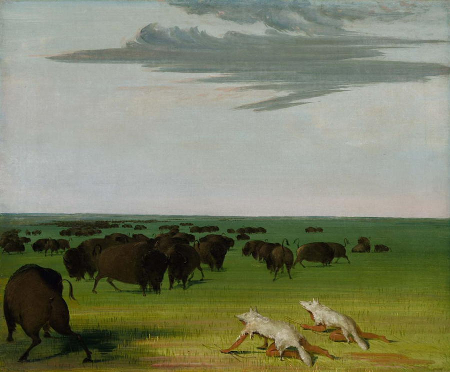 First Nations Hunters, George Catlin. https://commons.wikimedia.org/wiki/File:George_Catlin_-_Buffalo_Hunt_under_the_Wolf-skin_Mask_-_1985.66.414_-_Smithsonian_American_Art_Museum.jpg