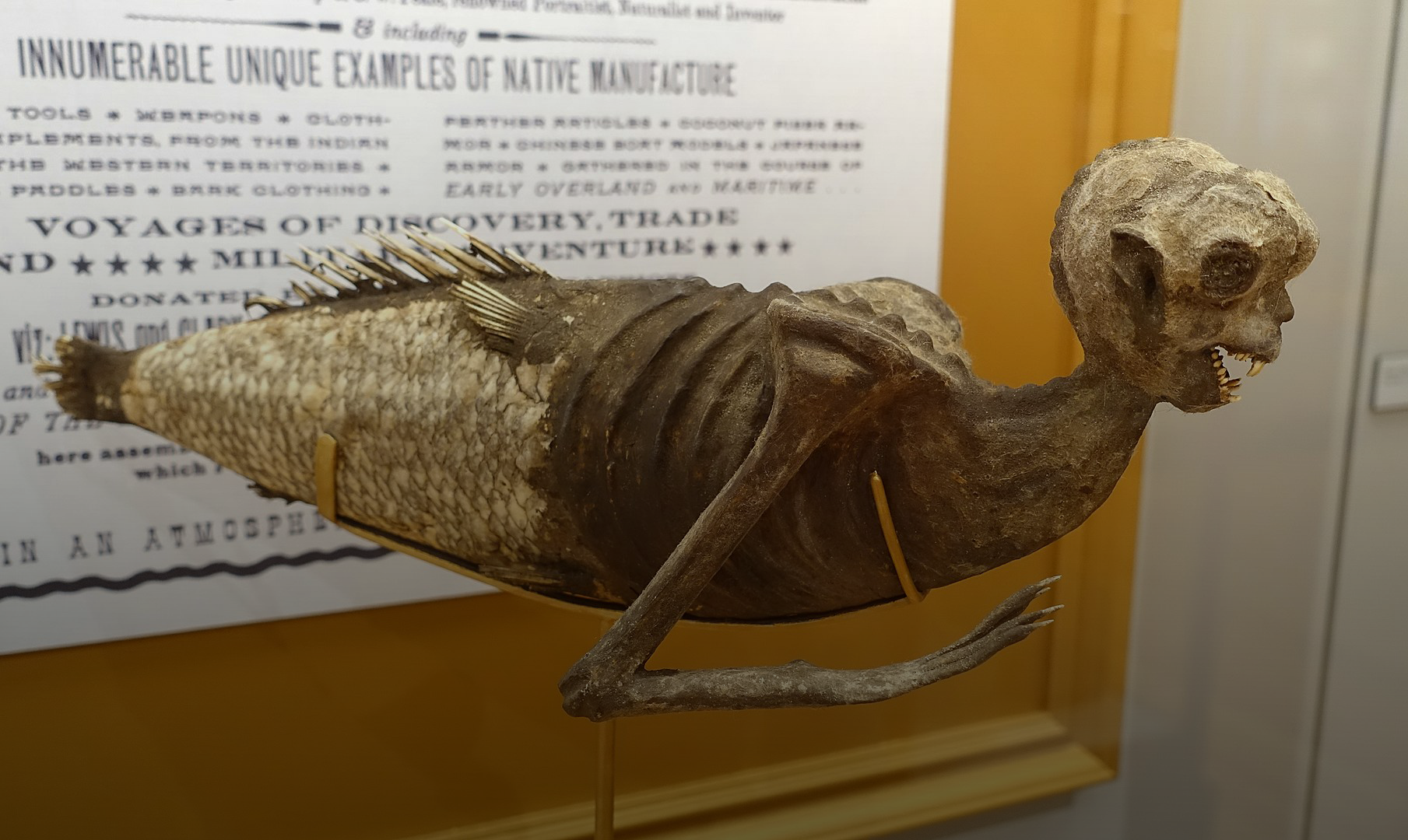 Feejee Mermaid, shown in P.T. Barnum's American Museum, 1842, as leased from Moses Kimball of the Boston Museum, papier-mache - Peabody Museum, Harvard University. By Daderot, Public Domain. https://commons.wikimedia.org/w/index.php?curid=69554826
