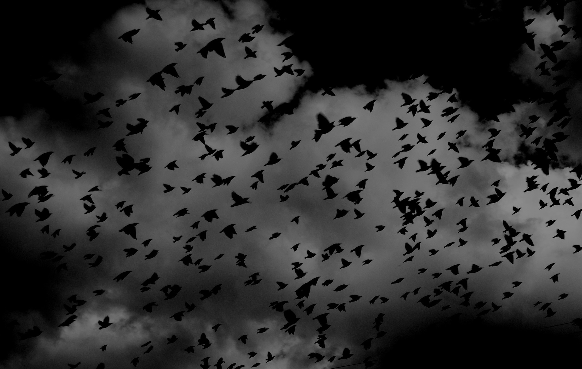 A Murder of Crows https://pixabay.com/photos/birds-flock-wings-flying-sky-691274/