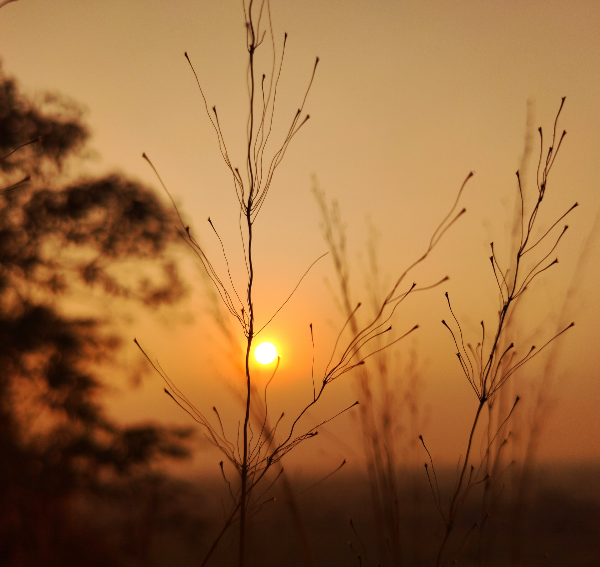 Grass silhouetted against sunset. Photo by FAISAL AHMAD on Unsplash.