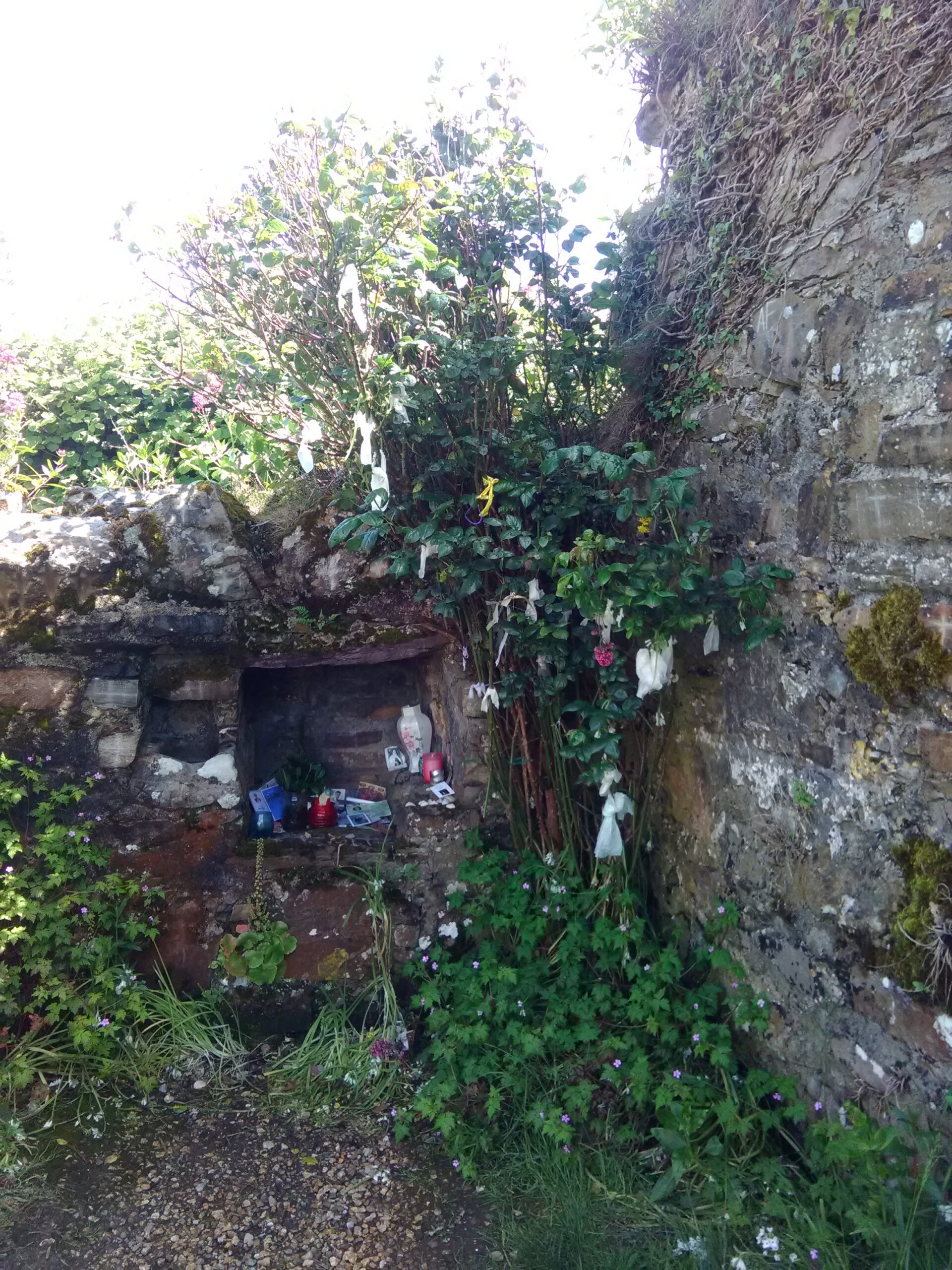 Offerings and rag tree near St Declan's Well, Co. Waterford, by Conchúr Mag Eacháin (photographer).