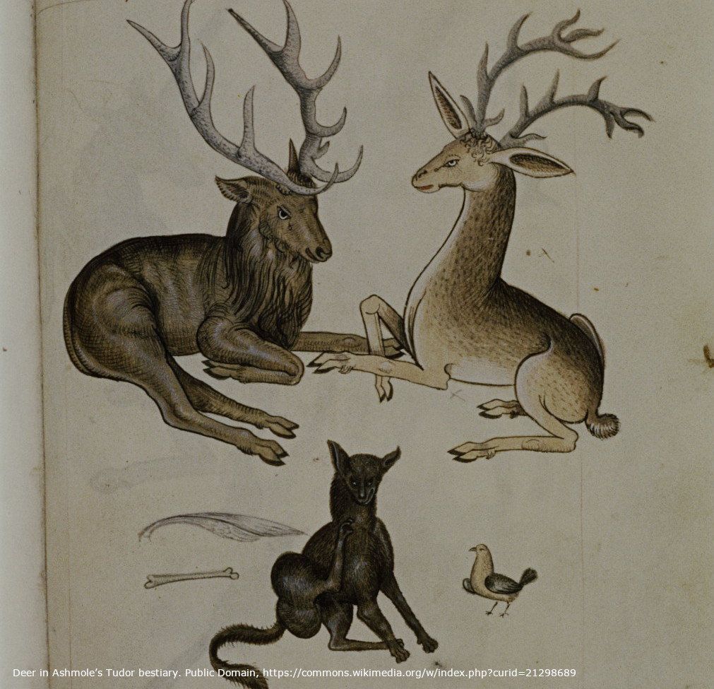 Deer in Ashmole's Tudor bestiary. Public Domain, https://commons.wikimedia.org/w/index.php?curid=21298689