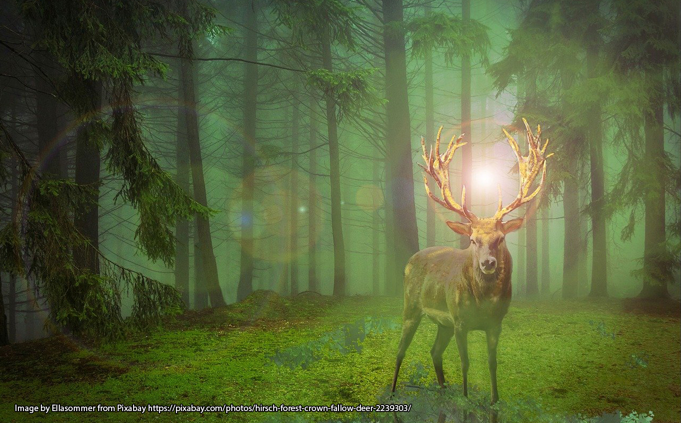Stag with shining antlers in a forest.
